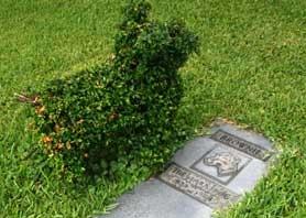 """Daytona Beach: Part 1 """"He Was A Good Dog"""""""